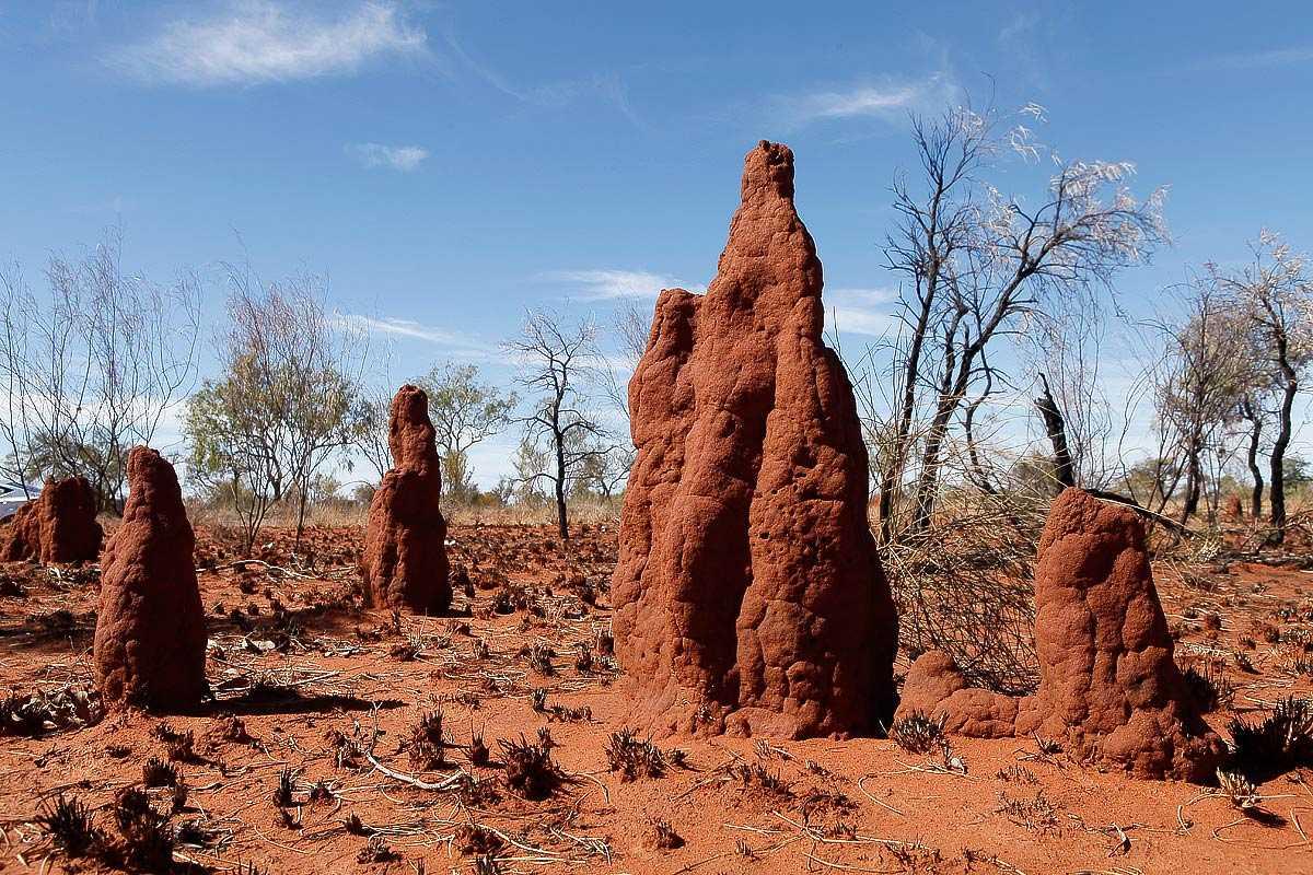 Lodo de termitas
